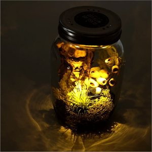 LEDグラスジャー L|gigiliving