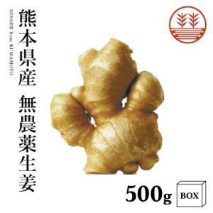 熊本県産無農薬生姜500g+箱|国産生姜|しょうが ショウガ|根生姜