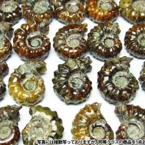 アンモナイト 化石 《rv》 m407-1|ginza-todo