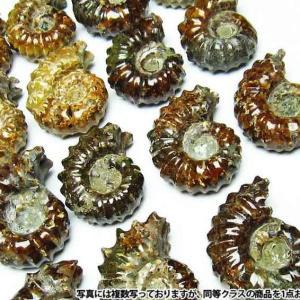 アンモナイト 化石 《rv》 m407-2|ginza-todo