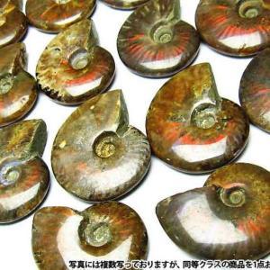 虹入り アンモナイト 化石 《rv》 m407-5|ginza-todo