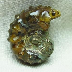 アンモナイト 化石 m85-691|ginza-todo