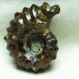 アンモナイト 化石 m85-786|ginza-todo