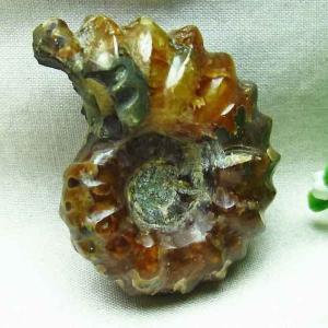 アンモナイト 化石 m85-788|ginza-todo