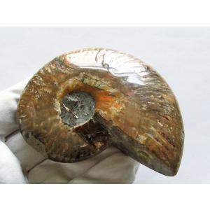虹入り アンモナイト 化石 t485-2477|ginza-todo|02