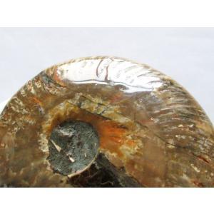 虹入り アンモナイト 化石 t485-2477|ginza-todo|04
