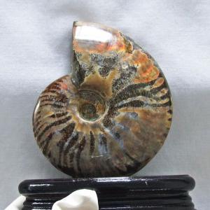 虹入り アンモナイト 化石 t570-3726|ginza-todo
