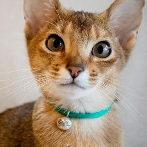 猫 首輪 鈴 おしゃれ かわいい necono ネコノ 猫の首輪 Luce Bell LadyBird ルーチェ ベル レディバードの画像