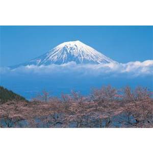 ポスター富士山/桜TX1831 gita