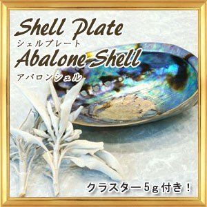 シェルプレート アバロンシェル 浄化用のお皿|giyaman-jewellery