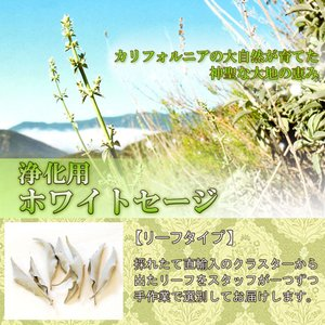 無農薬 高品質 カリフォルニア産 ホワイトセージ リーフ 5g 枝なし|giyaman-jewellery|03