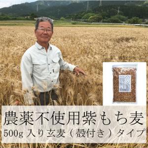 雑穀 もち麦 パック 国産 農薬不使用 栄養価最高峰の殻付き紫もち麦品種 セール