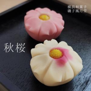 秋の上生菓子,秋桜,コスモス,練り切り 1個,個包装*12個以上でご注文可|gomadaremochi