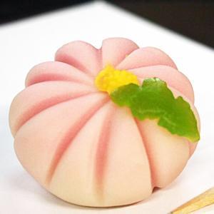 和菓子 練り切り 上生菓子 乙女菊 菊の花の上生菓子 個包装1個*12個以上でご注文可|gomadaremochi