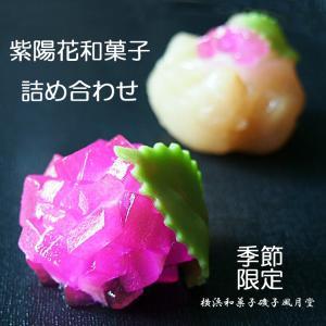 父の日ギフト 上生菓子 あじさい  紫陽花の詰め合せ12個入り ご贈答用化粧箱入|gomadaremochi
