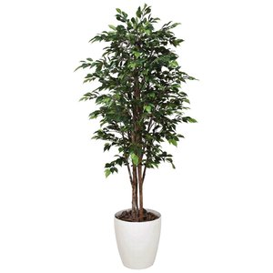 ロイヤル・ベンジャミン 180cm /造花の観葉植物 光触媒(空気浄化) インテリア・グリーン鉢植え /151C580-2817|goodfellow
