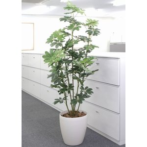 カポック 180cm /造花の観葉植物 光触媒(空気浄化) インテリア・グリーン鉢植え /158A300-3617|goodfellow
