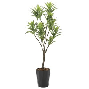 造花 観葉植物 「フレッシュ・ドラセナ 145cm」 光触媒 空気清浄 インテリア グリーン 38|goodfellow