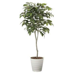 造花 観葉植物 「コーヒーの木 180cm」 光触媒(空気浄化) インテリア・グリーン 39|goodfellow