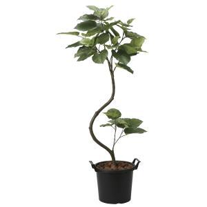 造花 観葉植物 「インテリア-ウンベラータ 165cm」 光触媒 空気清浄 インテリア グリーン 47|goodfellow