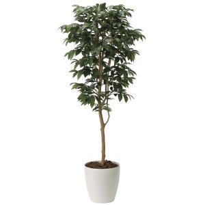 造花の観葉植物 「万両 /アルデシア 160cm」光触媒 空気清浄 インテリア・グリーン フェイク 50|goodfellow