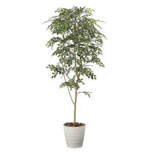 造花 観葉植物 「トネリコ 180cm」 光触媒(空気浄化) インテリア・グリーン 40|goodfellow
