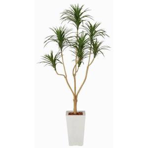 観葉植物 造花 光触媒 人工植物 グリーン /EX.ユッカ175cm 352A37017|goodfellow