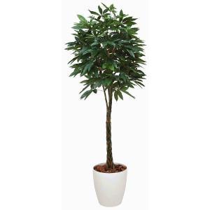 インテリアグリーン 造花 光触媒 人工植物 観葉植物 鉢植え /パキラ200cm 編込み 140B58026|goodfellow