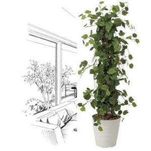 造花 観葉植物 光触媒 インテリアグリーン 鉢植え /グレープツリー120cm|goodfellow