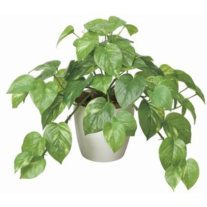 造花 観葉植物 フレッシュ・ポトス M 光触媒 空気清浄 インテリア植物 あすつく 送料無料|goodfellow