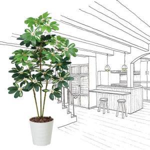 造花 観葉植物 光触媒 インテリアグリーン 鉢植え /カポック 斑入り120cm 371A15028|goodfellow