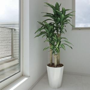 幸福の木 160cm /造花の観葉植物 光触媒(空気浄化) インテリア・グリーン鉢植え /400A300-2917|goodfellow