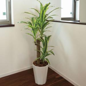 人工観葉植物 鉢植え インテリアグリーン 光触媒 造花 /フレッシュ・ドラセナ125cm|goodfellow