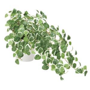 造花 観葉植物 「プミラ」 光触媒 空気清浄 インテリアグリーン 63|goodfellow