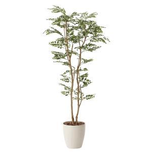 造花・光触媒(空気浄化) 観葉植物 インテリア・フェイク鉢植え /トネリコ160cm 603A32025-16|goodfellow