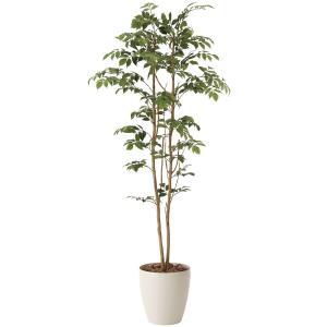 造花・光触媒(空気浄化) 観葉植物 インテリア・フェイク鉢植え /マウンテンアッシュ160cm 604A27026-16|goodfellow