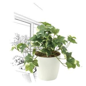 造花・観葉植物/フレッシュ斑入りアイビーS 25cm 光触媒(空気浄化)  インテリア・フェイク鉢植え  646A3546-16|goodfellow