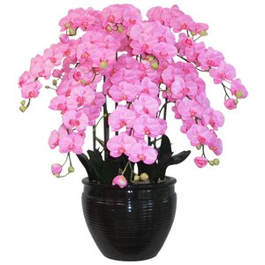 胡蝶蘭 鉢植 L(大)サイズ 10本立 ピンク 造花 光触媒(空気清浄) アートフラワー|goodfellow