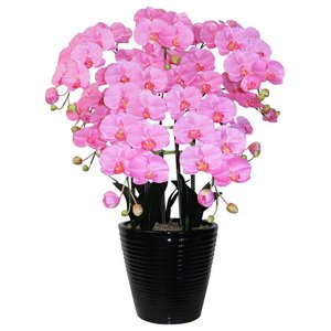 胡蝶蘭 鉢植 L(大)サイズ 5本立 ピンク 造花 光触媒(空気清浄) アートフラワー|goodfellow