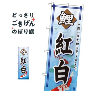 錦鯉紅白 のぼり旗 GNB-587|goods-pro