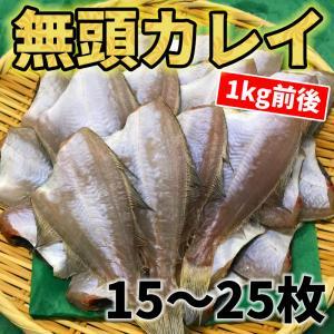 鳥取県産 一夜干し カレイ 無頭 1kg前後 15〜25枚 冷凍 鰈 エテカレイ イテカレイ 浜下水...