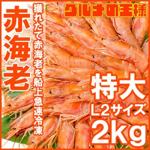赤海老 赤えび 2kg 特大 L2 30〜60尾 業務用 1箱 赤エビ あかえび アカエビ 寿司 刺...