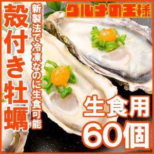 生牡蠣 殻付き 生食用カキ(60個入り 冷凍殻付き牡蠣 生食用)|gourmet-no-ousama