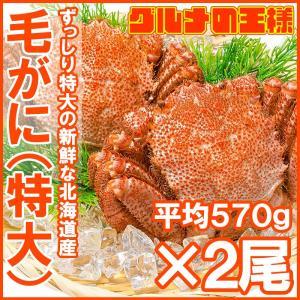毛がに 毛蟹 浜茹で メガ毛ガニ姿×2尾 570g|gourmet-no-ousama