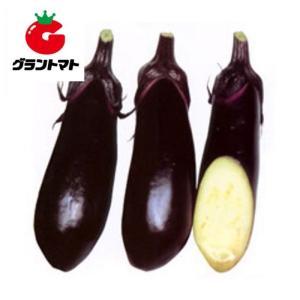水ナス 美男なす 20ml(約2000粒) 野菜種子【茄子 ナス】【取寄商品】 grantomato