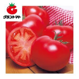 ホーム桃太郎トマト 1000粒 野菜種子【とまと】【取寄商品】 grantomato