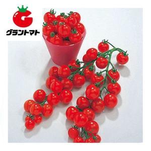ミニキャロル ミニトマト 5ml 野菜種子【とまと】【取寄商品】 grantomato