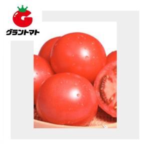 おどりこトマト 20ml 野菜種子【とまと】【取寄商品】 grantomato