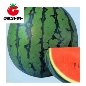 縞旭西瓜 200粒 野菜種子【スイカ すいか】【取寄商品】 grantomato