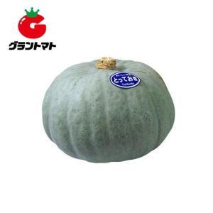とっておき南瓜 100粒 野菜種子【かぼちゃ カボチャ】【取寄商品】 grantomato